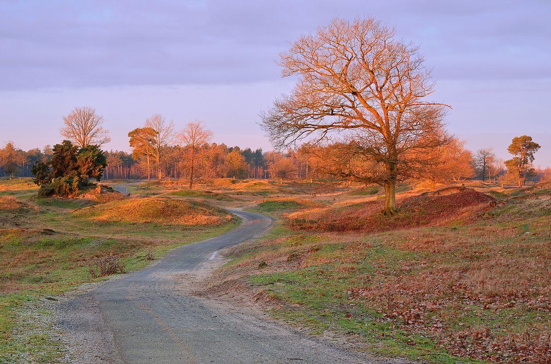 Фото бесплатно осень, поле, дорога, холмы, деревья, пейзаж, пейзажи