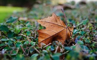 Фото бесплатно растение, кустарник, ветки