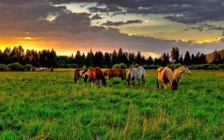 Фото бесплатно поле и лошади, пастбище, закат солнца