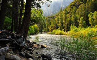 Фото бесплатно река, горы, лес