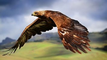 Бесплатные фото орел,клюв,крылья,перья,полет