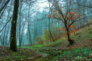 Бесплатные фото лес,деревья,речка,осень,туман,пейзаж