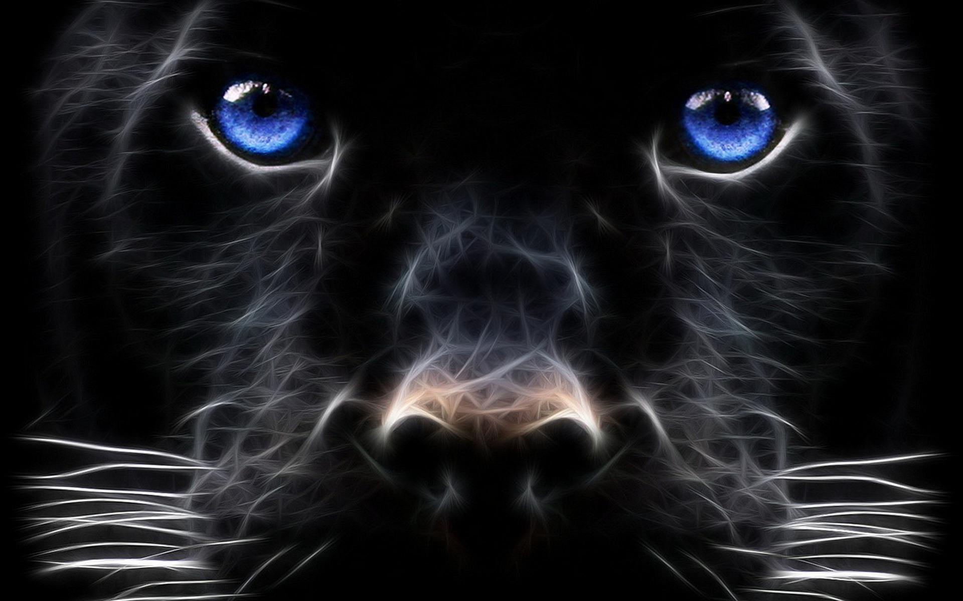 обои собака, морда, глаза, голубые картинки фото