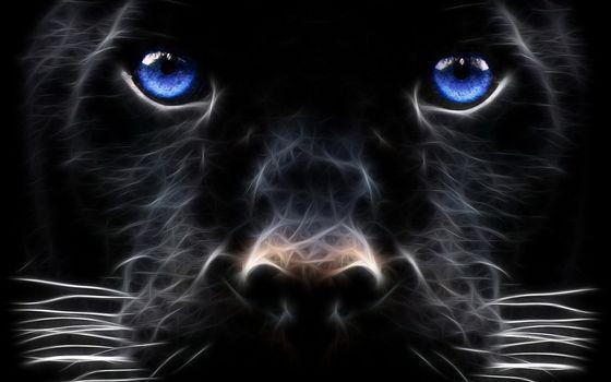 Фото бесплатно собака, морда, глаза, голубые, нос, усы
