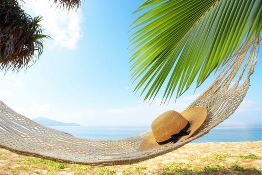 Photo free hammock on the beach, palms, ocean