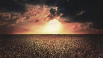 Фото бесплатно горизонт, солнце, поле