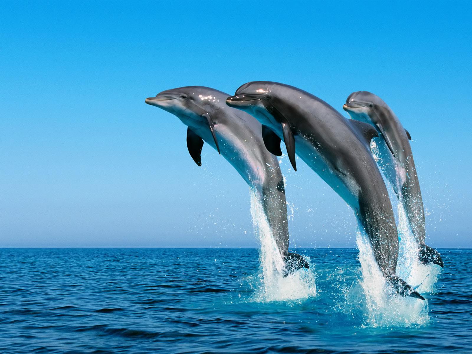 дельфины, прыжок, из океан