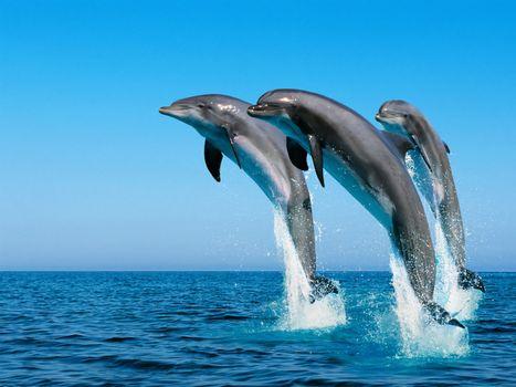 Фото бесплатно дельфины, прыжок, из океан