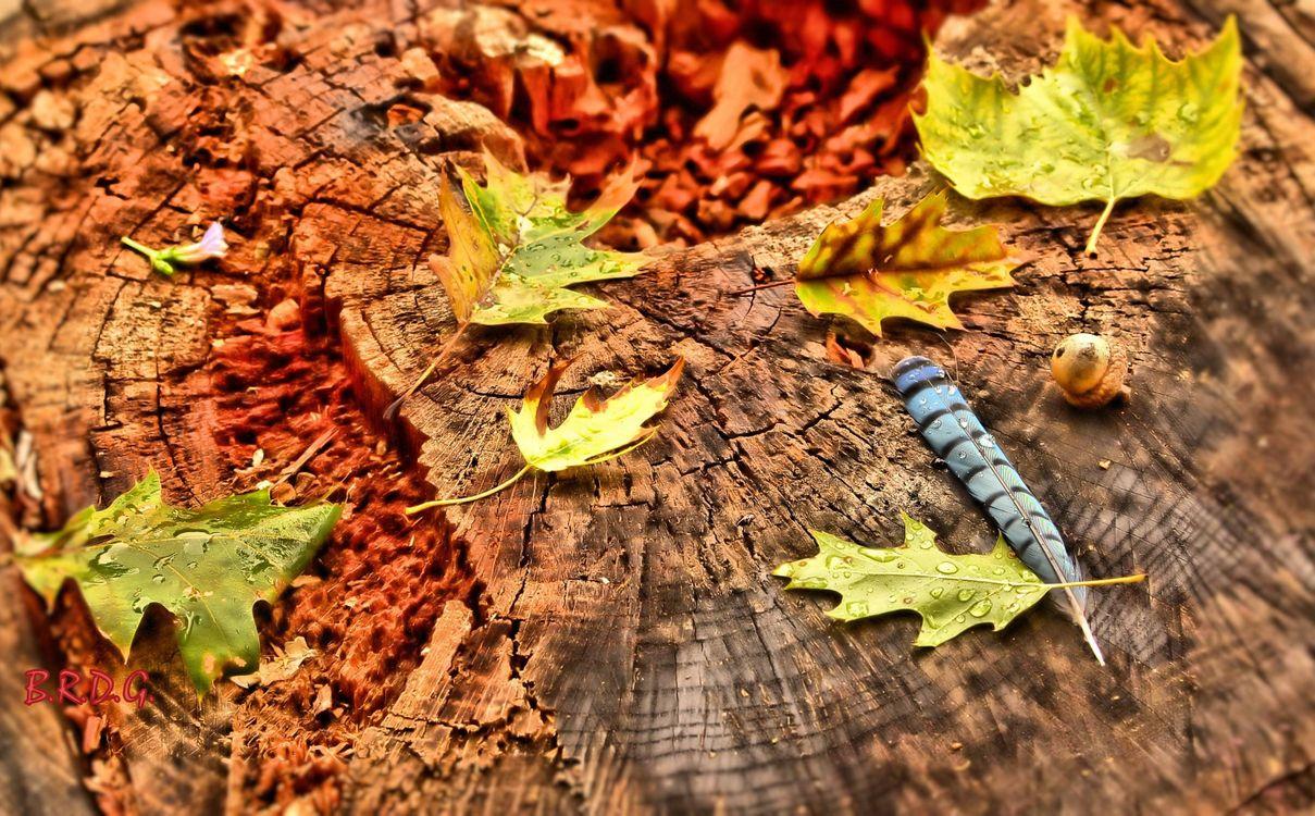 Фото бесплатно осень, пень, листья - на рабочий стол