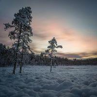 Фото бесплатно ночь, мороз, деревья