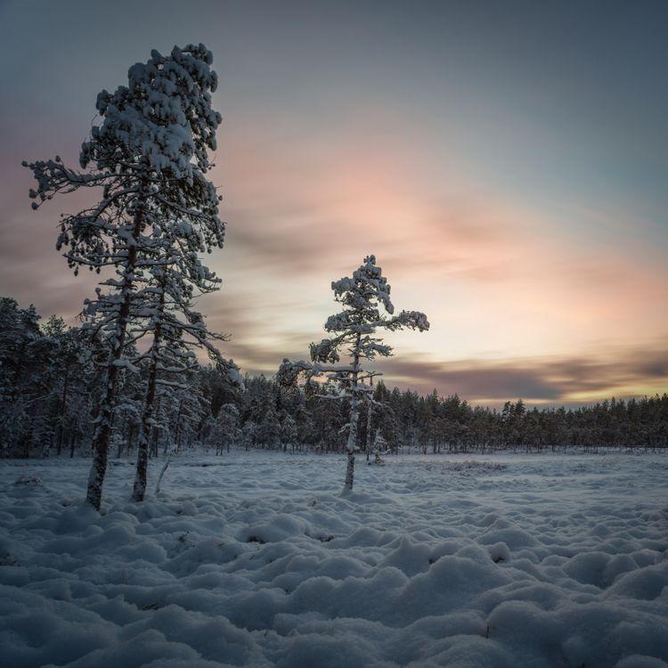 Фото бесплатно ночь, мороз, деревья - на рабочий стол