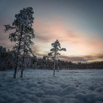Заставки ночь, мороз, деревья
