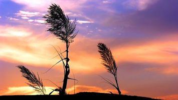Фото бесплатно колоски, ветер, закат