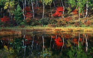 Бесплатные фото осень,озеро,гладь,отражение,трава,деревья,листва