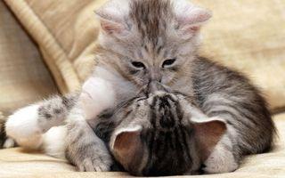 Фото бесплатно диван, котята, объятия