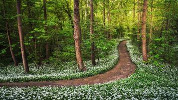 Бесплатные фото лес,долрга,деревья,цветы,природа