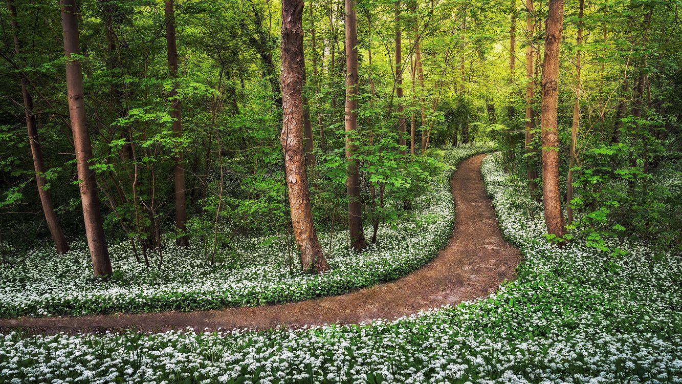 Фото бесплатно лес, долрга, деревья, цветы, природа, природа
