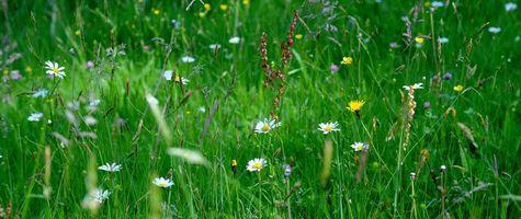 Фото бесплатно поле, трава, цветы