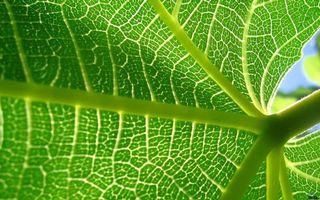 Фото бесплатно растение, лопух, лист