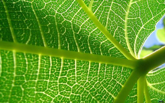 Photo free plant, burdock, leaf