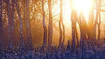 Фото бесплатно деревья, закат, лес