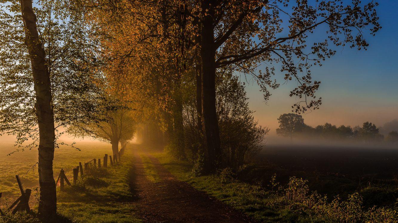 Free photo sunset, road, field - to desktop
