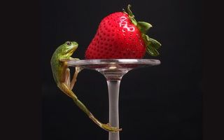 Бесплатные фото фужер,ножка,ягода,клубника,лягушка,зеленая,лапы