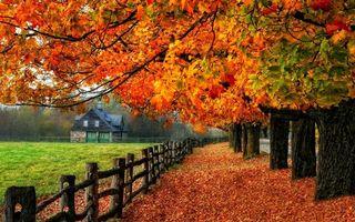 Фото бесплатно осень, деревья, листва, ограда, трава, дом