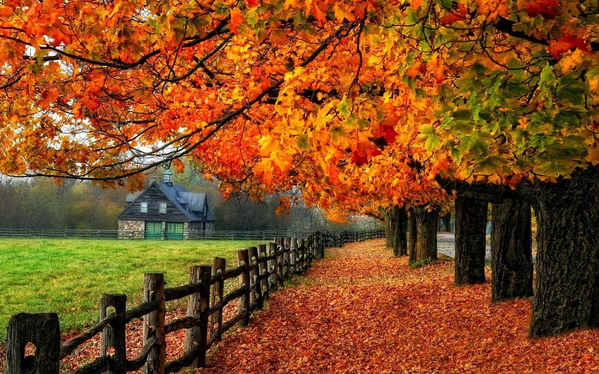 Free photo autumn, foliage, house - to desktop