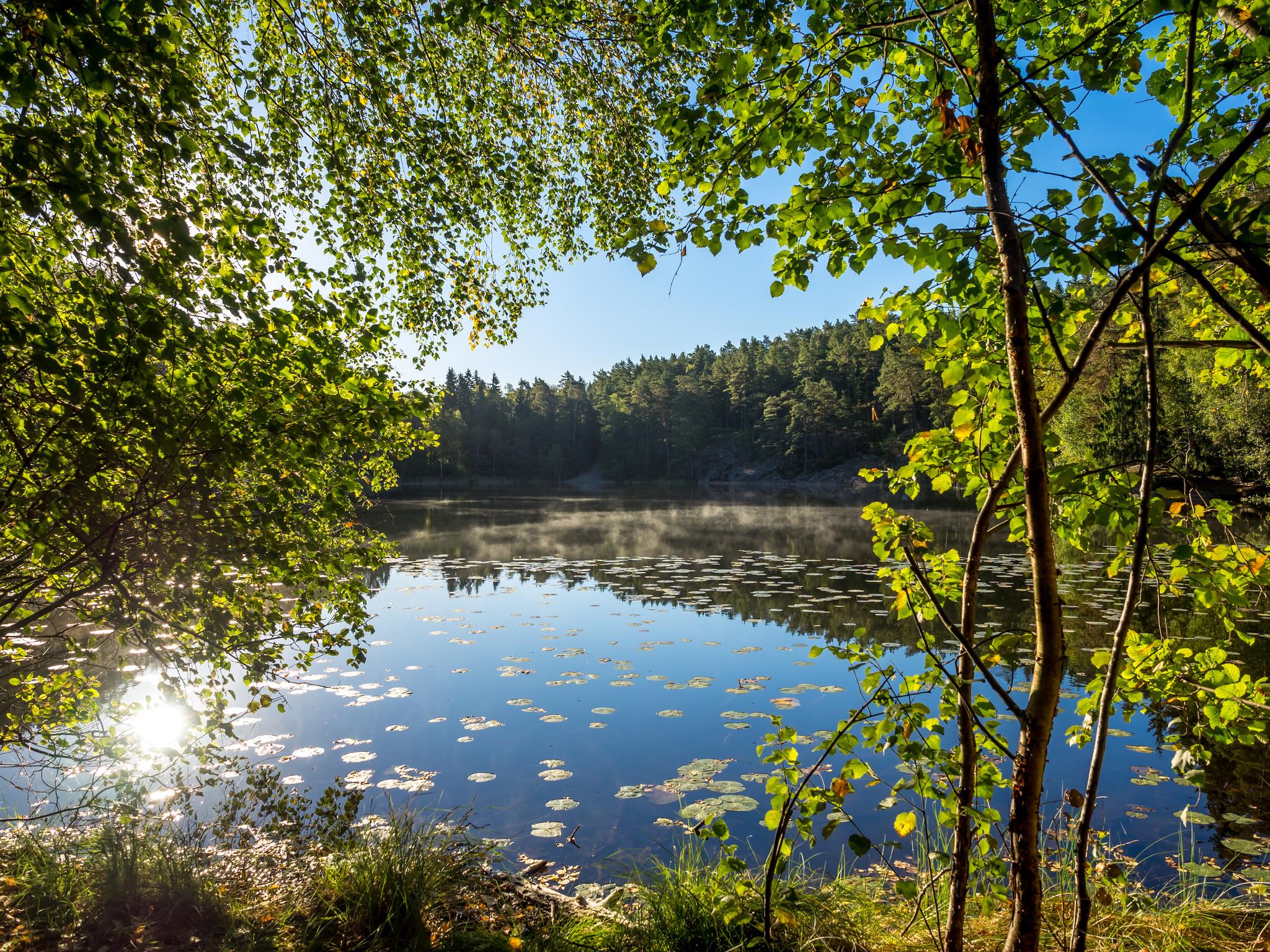 обои озеро, водоём, лес, деревья картинки фото