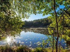 Заставки озеро, водоём, лес