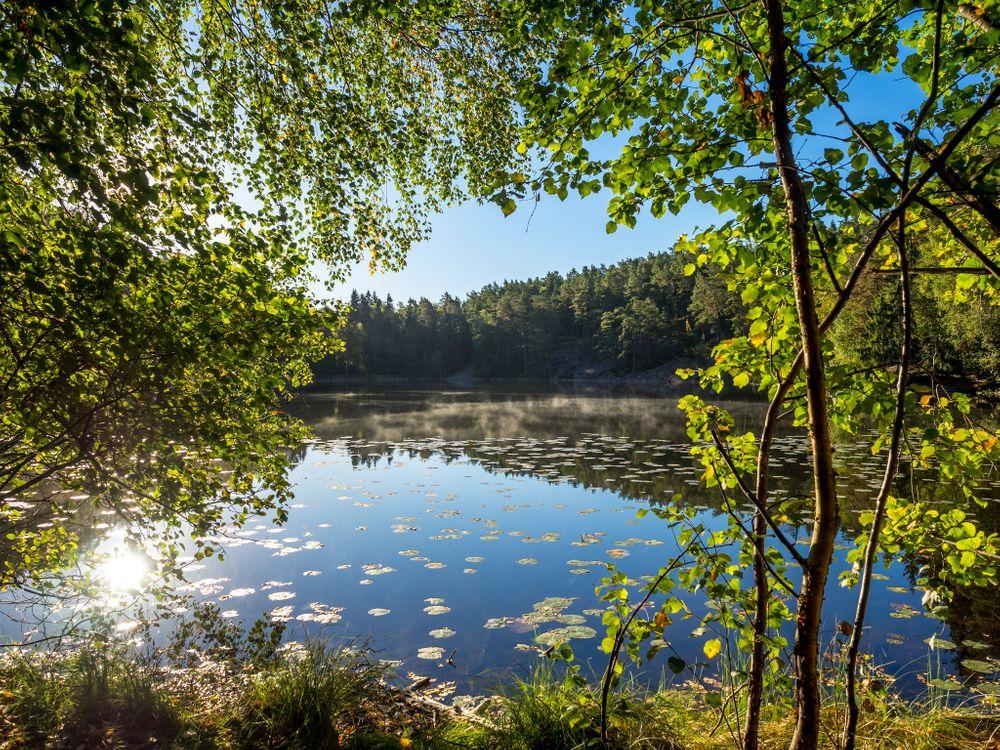 Фото бесплатно озеро, водоём, лес - на рабочий стол