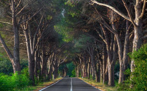 лесная дорога, старые деревья, лес, ветви, трасса