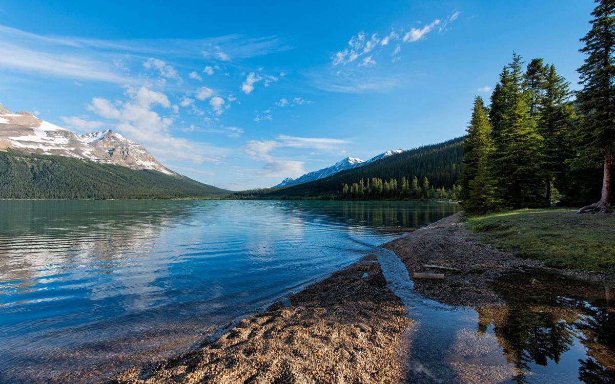 Фото бесплатно озеро, лес, деревья, трава, синее небо, природа