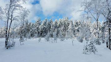 Бесплатные фото зима,снег,сугробы,деревья,пейзаж
