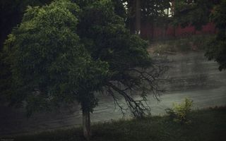 Заставки берег,трава,кустарник,деревья,река,течение