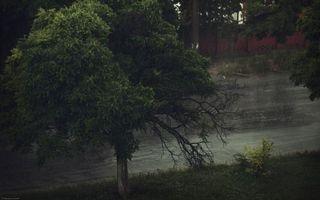 Бесплатные фото берег,трава,кустарник,деревья,река,течение