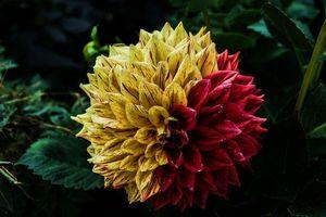 Обои на стол цветок, флора