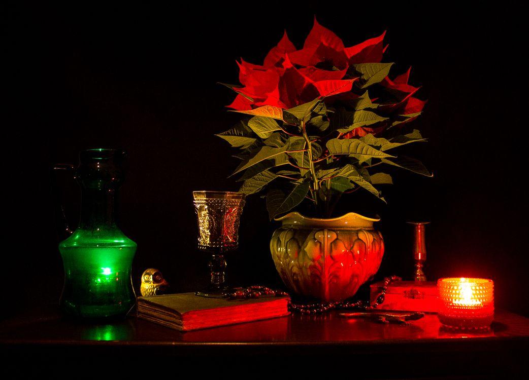 Фото бесплатно свеча, горшок, растение, книга, ваза, натюрморт, разное