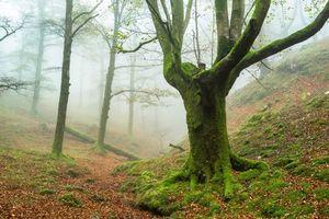 Фото бесплатно лес, деревья, туман, природа