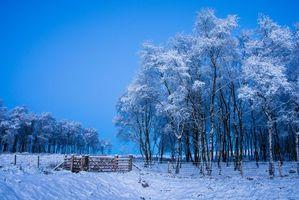 Бесплатные фото зима,поле,деревья,снег,пейзаж