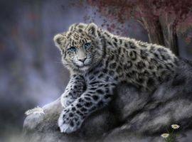 Бесплатные фото Дальневосточный,леопард,art