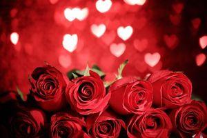 Photo free Valentine s Day, roses, Valentine s day
