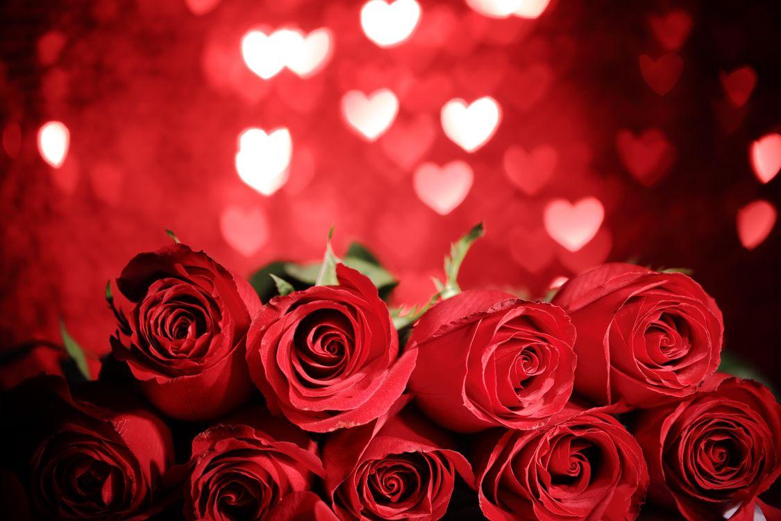 Фото бесплатно день святого валентина, день влюбленных, с днём святого валентина, с днём всех влюблённых, Валентинка, Валентинки, розы, цветы