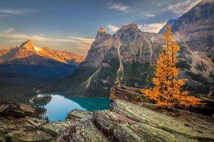 Обои Canada, Yoho National Park, Lake O Hara, озеро, горы, скалы, осень, пейзаж