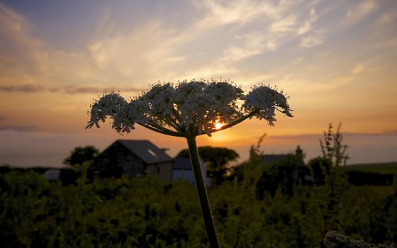 Фото бесплатно деревня, изба, огород, укроп, соцветие, небо, закат, солнце