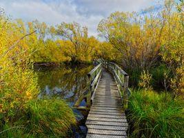 Бесплатные фото осень, деревья, водоём, мост, пейзаж