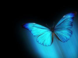 Обои бабочка, черный, фон, крылья, синие