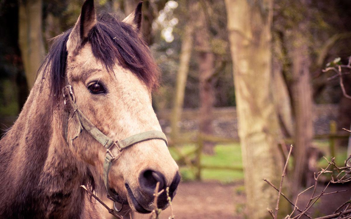 Фото бесплатно лошадь, конь, морда, узда, грива, ветви, деревья, животные - скачать на рабочий стол