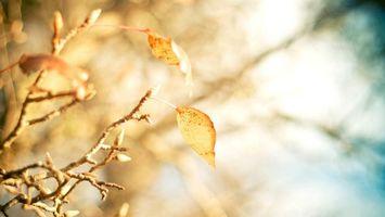 Бесплатные фото осень,ветви,листья,желтые,почки,фон,мутный